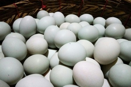 jual telur asin, jual telur asin jogja, harga telur asin terbaru, jual telur asin di magelang, jual telur asin di bantul, jual telur asin di sleman, jual telur asin di brebes