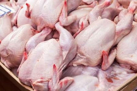Distributor Ayam Potong Yogyakarta Berkualitas